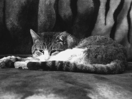 La zi pe Metropotam - Cat show!