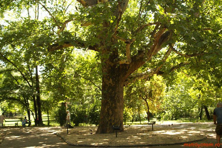 Frumoasa din padurea fara copaci, parodie de basm muzical ...