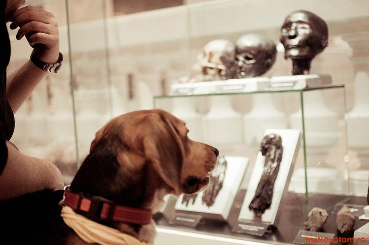 Muzeul Antipa (Ziua Zgarzilor Deschise)