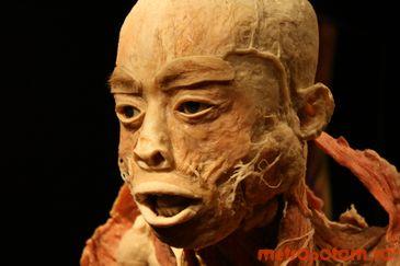 The Human Body - Expozitie de cadavre umane la Muzeul Antipa