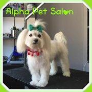 Salon frizerie canina AlphaPet, Bucuresti