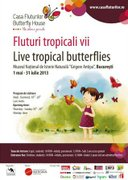 Expozitii - Fluturi tropicali vii
