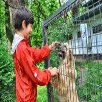 Utile - In Sectorul 4 se strang cainii fara stapan din apropierea scolilor