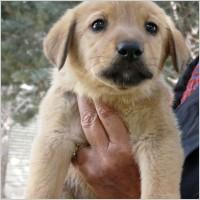 Utile - Bucurestenii care adopta caini din adaposturile primariei primesc gratuit 20 kilograme de mancare pentru animal