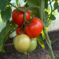 La zi pe Metropotam - Alimente care contin sub 40 de calorii