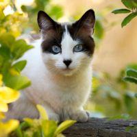 Unde merg pisicile cand pleaca de acasa, un studiu care te va uimi