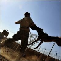 Utile - Bucuresti - Pentru prinderea unui caine fara stapan se va plati 219 lei