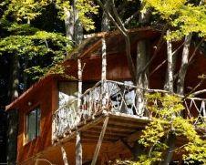 Locuri de vizitat - Idee de vacanta: Casa din copac de la Predeal