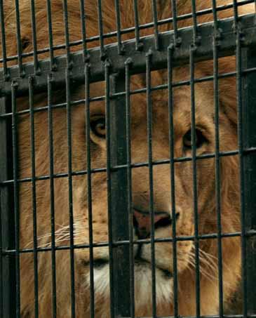 Gradina Zoologica din Bucuresti se extinde si devine Bio Parc Zoo