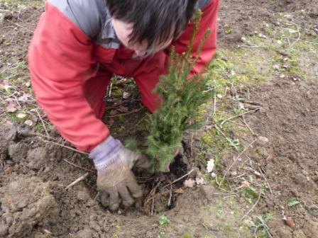 Cum poti sa plantezi brazi in Bucuresti cu ajutorul primariei