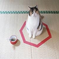 Am testat fenomenul de pe internet - cum sa-ti prinzi pisica intr-un cerc