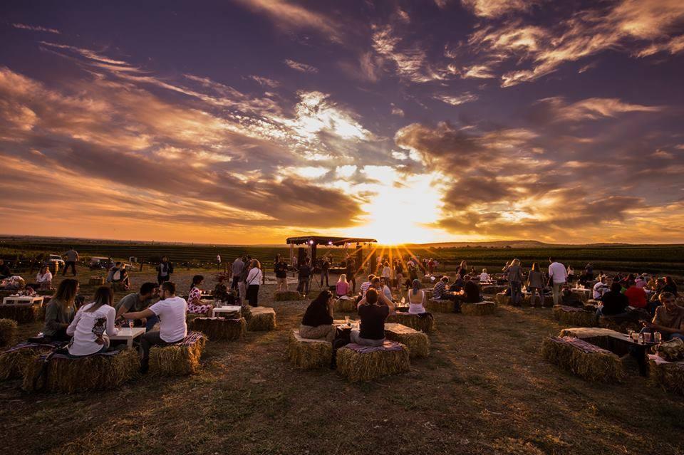 MAUVE Wine Experience III - Festival de muzica si film