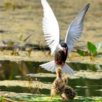 Locuri de vizitat - I <3 Bucuresti: fotografii superbe cu animalele si plantele din Delta din Bucuresti