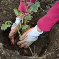 Utile - Copacii uscati din Bucuresti vor fi inventariati si smulsi - In loc se vor planta alti arbori