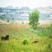 Locuri de vizitat - Descopera Bucurestiul la pas: un itinerariu de plimbat prin locurile frumoase ale orasului - partea II