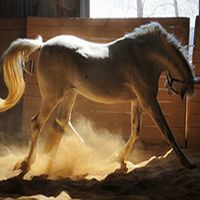 Locuri de vizitat - Idee de vacanta: Clubul de echitatie Equestria, locul din apropierea Bucurestiului unde poti invata sa calaresti