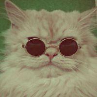 Potrivit studiilor, pisicile nu sunt cele mai bune animale de companie