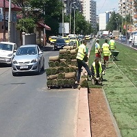 Utile - Pe linia de rulare a tramvaiului din Calea Vitan se va planta gazon pana la finalul lunii Iunie