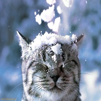 Utile - Se schimba vremea si incep ninsorile la munte