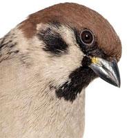 """Interviuri - Interviu cu Birding in Bucharest and Around - """"In Romania numarul celor care practica acest hobby este probabil de ordinul sutelor"""""""