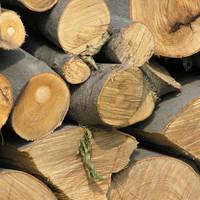 Utile - Familiile cu venituri mici din Sectorul 4 primesc lemne de la primarie