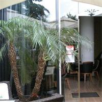 Cronici Restaurante din Romania - Haute Pepper Restaurant & Lounge - locul cu muzica italiana din Piata Constitutiei