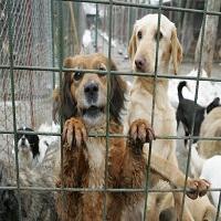 La zi pe Metropotam - S-a deschis primul spital pentru animale fara stapan din Romania