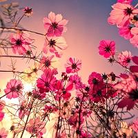 Utile - Mii de flori au fost plantate in Sectorul 3 din Bucuresti