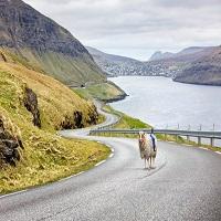 La zi pe Metropotam - Locuitorii din Insulele Feroe au montat camere 360 pe oile lor