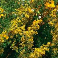 BURUIENI BIRUITOARE: Expoziție și atelier interactiv cu plante de leac