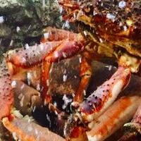 Cronici Restaurante din Bucuresti, Romania - CRONICA: Dancing Lobster - povesti culinare delicioase din gastronomia portugheza pe acorduri de fado