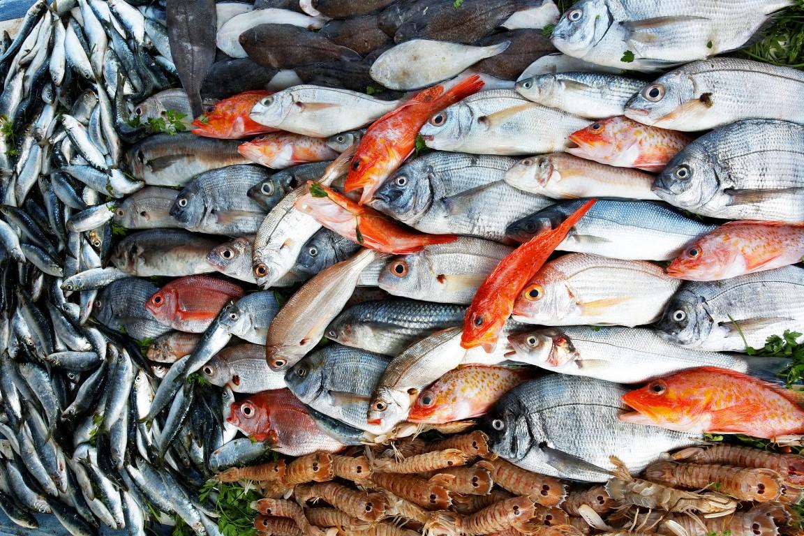 fish-at-the-market__Medium_.jpg