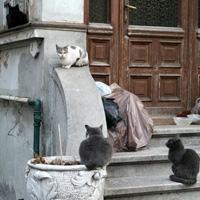 Cate pisici se afla in Bucuresti - v-ati intrebat vreodata?