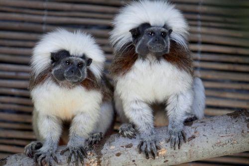 Gradina Zoologica din Bucuresti se extinde pe o suprafata de 10 ori mai mare