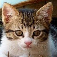 La zi pe Metropotam - Cum reactioneaza pisicile atunci cand aud un metronom