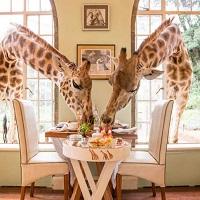 Cele mai bizare restaurante din lume