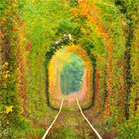 Locuri de vizitat - Tunelul dragostei din Romania - un loc minunat despre care nu stiai